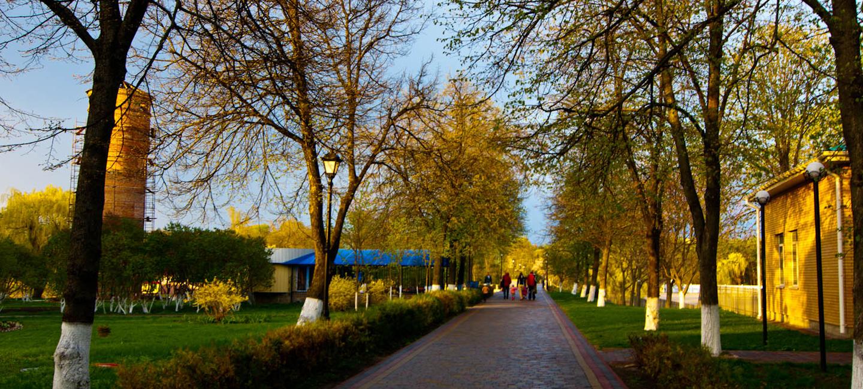 Развлечения в Миргороде